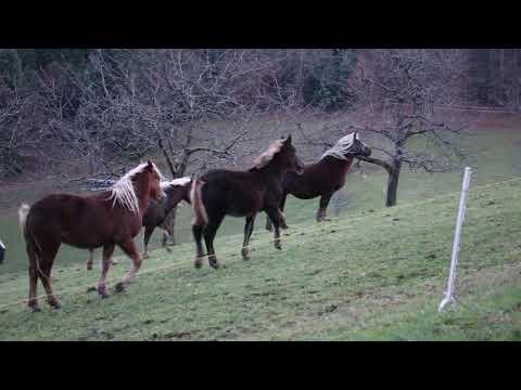 Pferdekoppel am Abend Orchesterstück von Ralf Christoph Kaiser