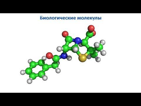 Биологические молекулы