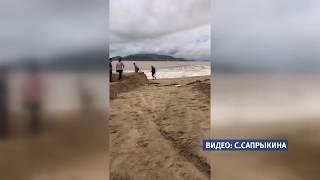 Алтайских туристов предупреждают о бушующем тайфуне в Нячанге