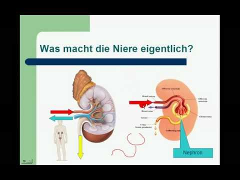 Ob Typ-2-Diabetes behandelt, ja oder nein