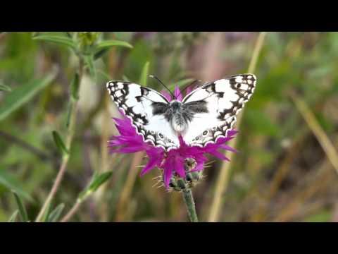 סרטון נפלא של הפרחים והפרפרים הצבעוניים בעמק איילון