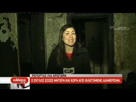 Ο σκύλος έσωσε δύο γυναίκες από φλεγόμενο διαμέρισμα στην Πολίχνη | 27/02/2019 | ΕΡΤ