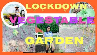 LOCKDOWN VEGETABLE GARDEN 2020 NEW YORK/ vegetable garden tour 2020