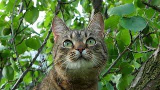 Беременная женщина приказала мужу вывезти их домашнего кота в лес