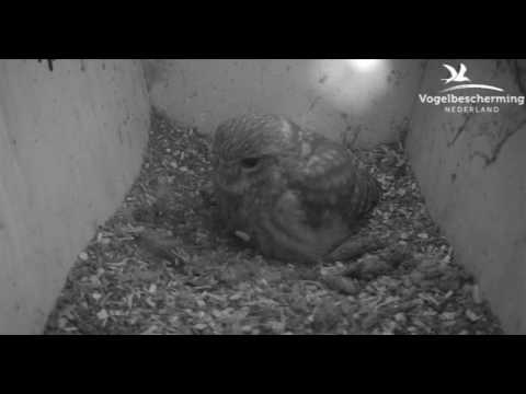 Family 2: Second Egg Laid - 17.04.17