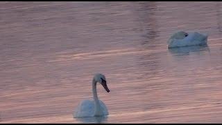 Лебединое Озеро под Керчью