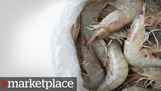 Testing shrimp for antibiotic-resistant bacteria (Marketplace)