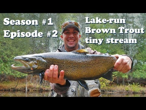 Upper Peninsula, fly fishing, lake run, brown trout, 2018