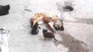 Mother cat with kittens came to old friend - Mr Dog