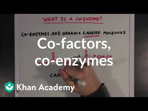 Co Factors Co Enzymes And Vitamins Video Khan Academy