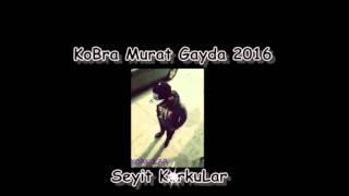 Kobra Murat Gayda Sürüngah 2016 Seyit KorkuLar
