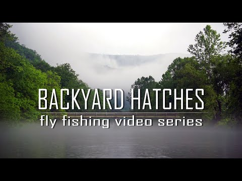 Backyard Hatches | Fly Fishing Video Series