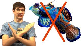3 Saltwater Fish Beginners Should AVOID!