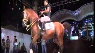 تحميل اغاني مهرجان ال دلول احمد دلول رقصة الحصان (3) MP3