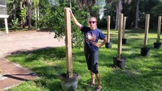 How to grow Dragon Fruit in SWFL ( part 1 )