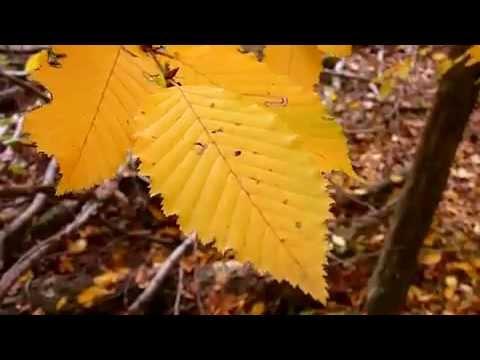 ДДТ-Осень