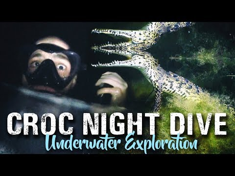 CROCODILE NIGHT SCUBA DIVING | Crazy things to do in Tulum, Mexico