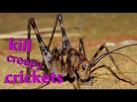 KILL ALL CRICKETS FAST!