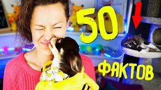 50 ФАКТОВ о моей СОБАКЕ ПОКЕМОН ЮМИ ЧУ Magic Family