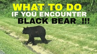 WHAT TO DO IF YOU ENCOUNTER A BLACK BEAR !!!