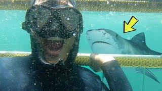 (南非玩命) 潛水看大白鲨的代價   Shark Cage Diving in Cape Town