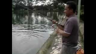 preview picture of video 'Ikan Keli kulai'