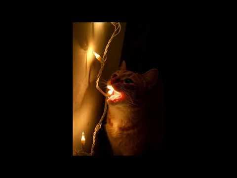 Rufus Wainwright - Hallelujah (музыка из Шрека, когда осёл повстречал дракона-даму)