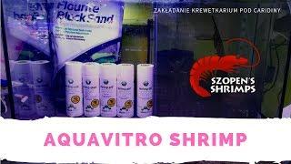 AquaVitro Shrimp - zakładanie krewetkarium Caridina