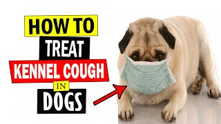How to Treat Kennel Cough in Dogs    Home Remedies for Kennel Cough Treatment in Dogs