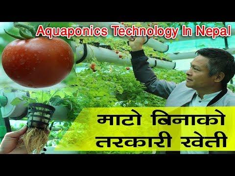 हेर्दै अचम्म, माटो विना पानीमा तरकारी खेती ! घरको छतमै घना जंगल ! Aquaponics Technology In Nepal