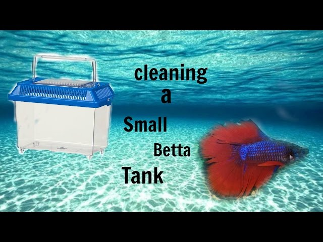 How to clean a small betta tank(READ DESCRIPTION)