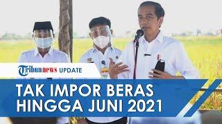 Janji Jokowi soal Tutup Keran Impor Beras hingga Juni 2021, Bisa Diperpanjang dengan Kondisi Berikut