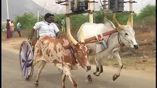 2017 Rekla Race Cumbum-Theni District...