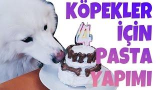 KÖPEKLER İÇİN DOĞUMGÜNÜ PASTASI YAPIMI (PUPCAKE) ❤️  Köpeğim Çarşı'ya Sürpriz Doğumgünü
