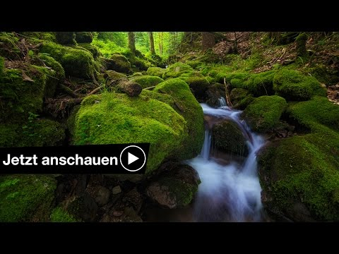 📷 4 Tipps zum fotografieren im Wald 🌲 Benjamin Jaworskyj fotografieren lernen
