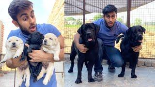 How To Start Dog Business  | Labrador Special Vlog