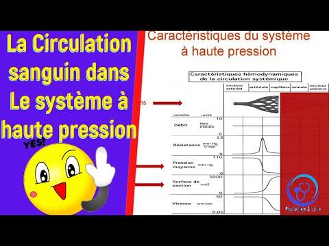 Basse pression sanguine qui affecte
