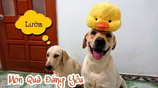 Fan Sài Gòn tặng Củ Cải Kim Chi quà gì vậy - Củ Cải khui quà siêu lầy