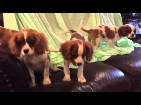 my playful Puppies: Jane and Siblings