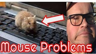 Mouse Infestation - Get rid of for good