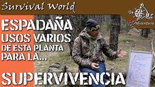 Supervivencia - Usos de la Espadaña - JJ.Adventure