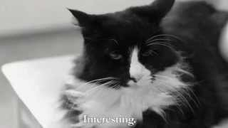 """Henri 10 - """"Reigning Cat, and Dog"""""""