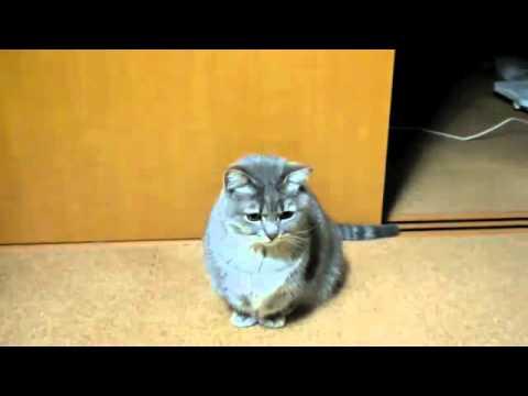 Chú mèo dễ thương nhất Youtube