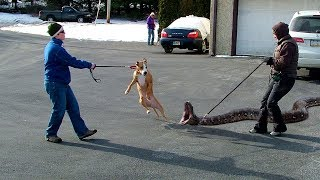 STRANGEST Animals People Keep As Pets!