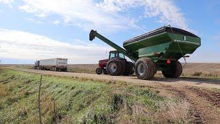 Harvest... Full Speed Ahead!