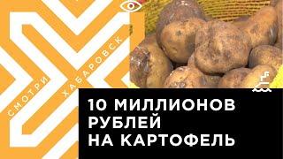 Производителей картофеля поддержат краевыми грантами в Хабаровском крае