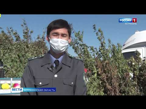 Специалисты Управления Россельхознадзора проводят фитосанитарный контроль посадочного материала на рынках Астраханской области