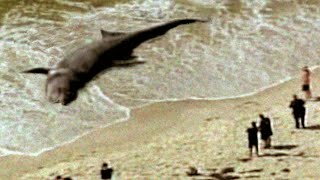 MEGALODON WASHES UP ON BEACH