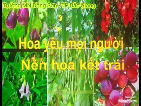 Thơ Hoa kết trái – GV Trường MN Đồng Sơn
