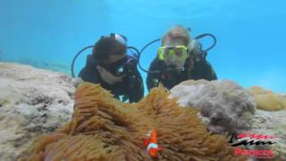 Passions of Paradise | Great Barrier Reef tour Cairns
